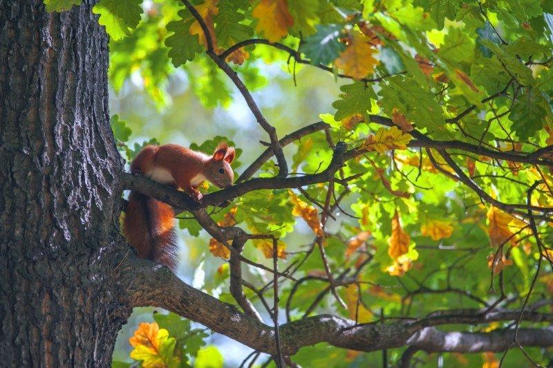 media/image/squirrel-P8UQF8P.jpg