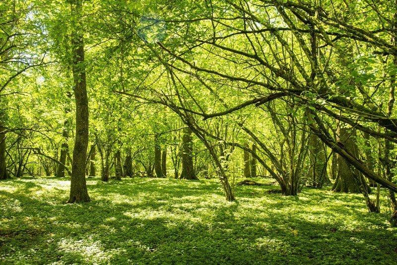 media/image/forest-4251952_1280.jpg